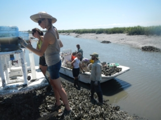 image of Oyster researchers