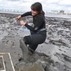 image of Linsey taking Gracilaria measurements
